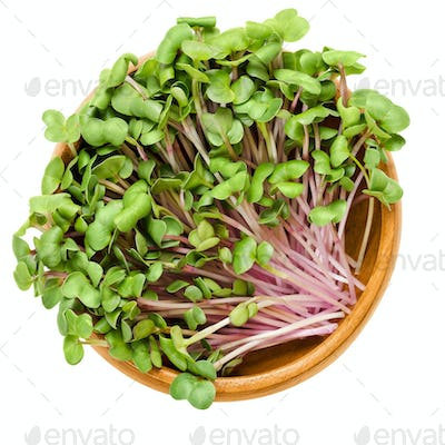 China Rose radish sprouts in wooden bowl