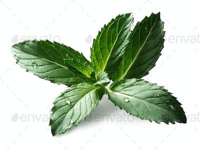 Peppermint (sweet mint) leaves