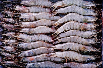 Whole fresh raw shrimps seafood