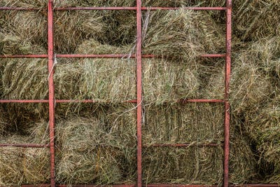 Dry Hay Stacks into a Transportation Truck