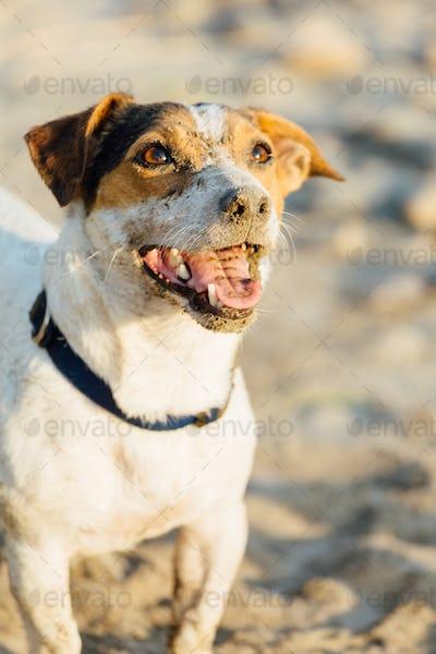 Adorable dog posing on beach