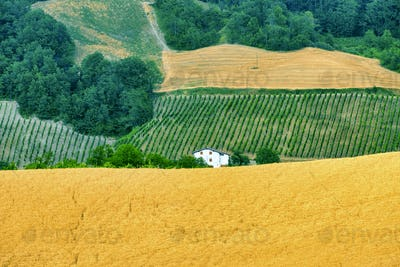 Oltrepo Pavese (Italy), rural landscape at summer