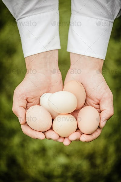 Eggs in Hands