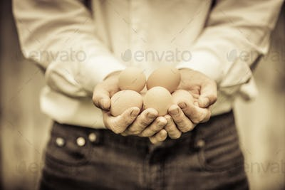 Closeup of Farmer Holding Eggs