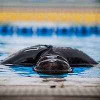 Freediving Performer doing Static Apnea
