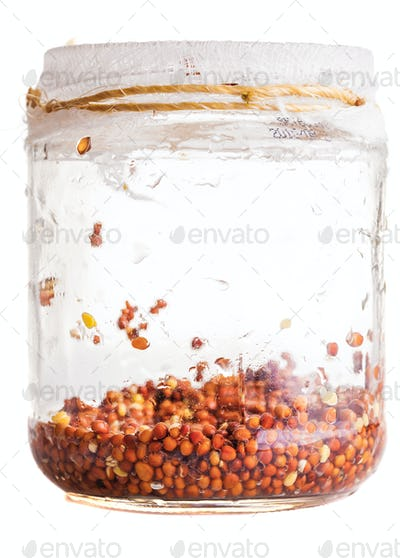 Wet Sprouting Radish Seeds in a Glass Jar