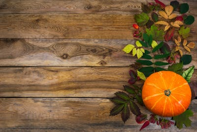 Thanksgiving  background with leaves and squash on old table