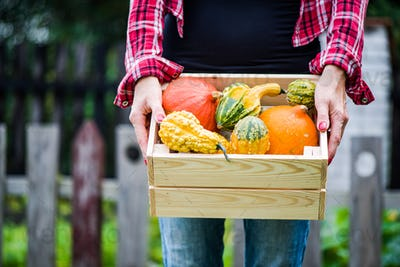 Casual tattooed girl holding crate with pumpkins