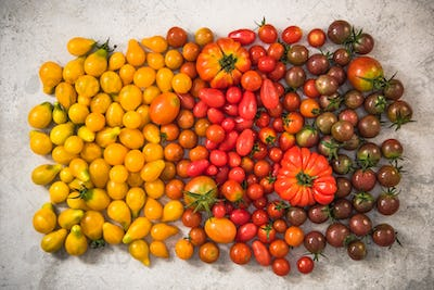 Colorful gamma of tomatoes
