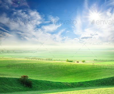 Wavy field with a green grass