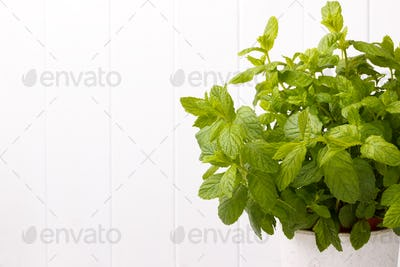 Bunch of fresh organic mint