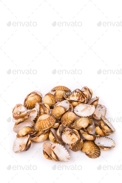 Cockles shells are  recycled as partial cement replacement in co