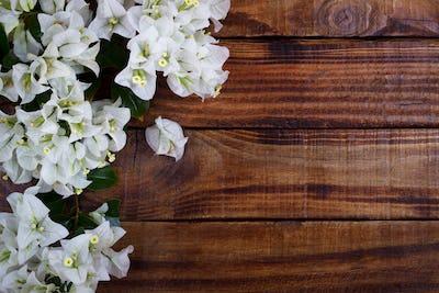 bougainvillea on wooden background
