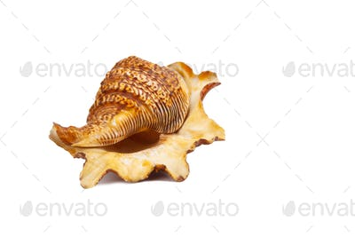 Sea shells and sand