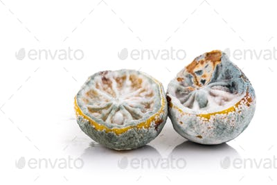 Rotten, moldy and decomposing lemon on white background