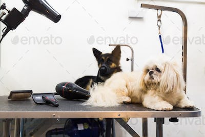 Dogs on grooming salon table ready to be groomed