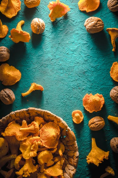 Frame of chanterelles and walnuts on a bright turquoise table