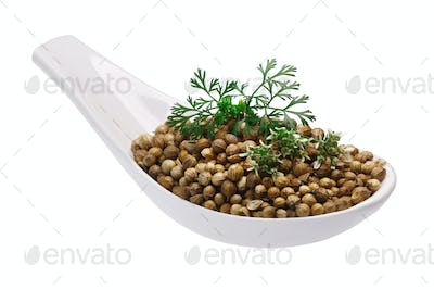 Spoon of coriander seeds, flowers, paths