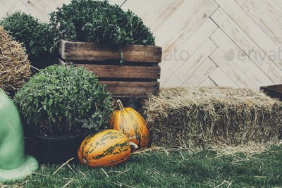 Autumn harvest, ripe vegetables, organic food