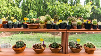 Succulents and cacti in hothouse