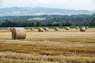 Rivalta Trebbia (Piacenza), landscape