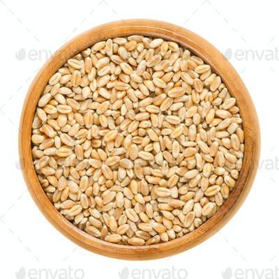 Common wheat in wooden bowl over white
