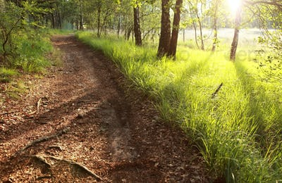 morning sunlight on forest path