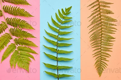 Fashion Tropical Leaf.Minimal Art.Fern Leaf.Summer