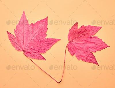 Autumn Arrives. Art Gallery. Fashion.Maple Leaves