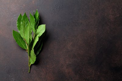 Bay leaves. Herbs and spices