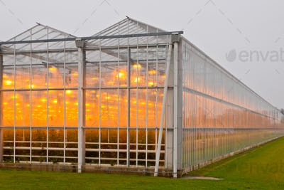 Exterior of a giant commercial glasshouse