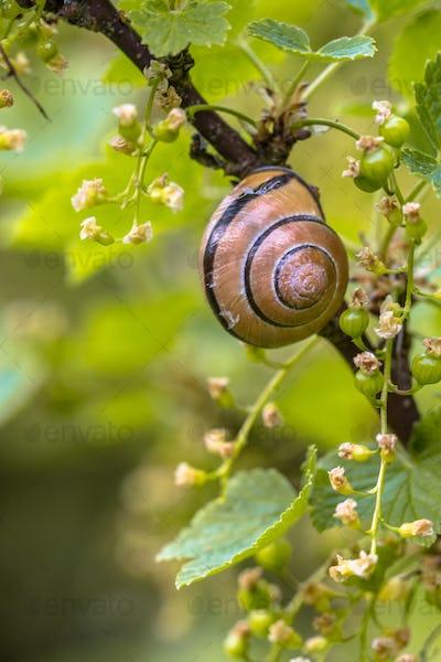 Cozy Garden scene with Grove snail