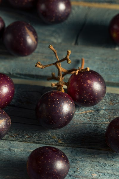 Homemade Sweet Muscadine Grapes