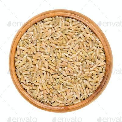 Whole grain green spelt in wooden bowl