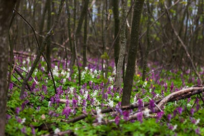 Bright flowers in the forest