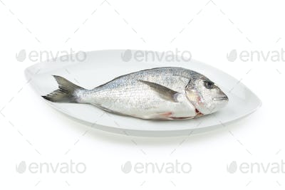 Dorada seafood on white elliptic plate with shadow. Bream fish.
