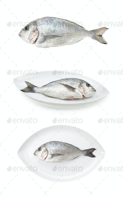 Dorada seafood three samples. Bream fish, raw food.