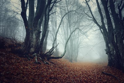 Mysterious dark autumn forest in fog with orange leaves, trees a