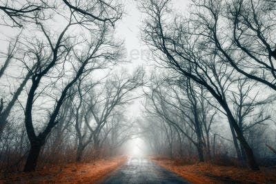Mysterious dark autumn forest in fog with orange leaves, road, t