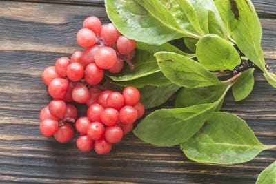 Chinese magnolia berries