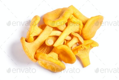 Chanterelles Cantharellus cibarius mushrooms, paths, top view