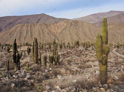 Pucara de Tilcara, Argentina