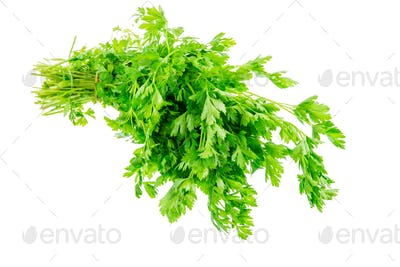 Isolated bunch of fresh garden parsley