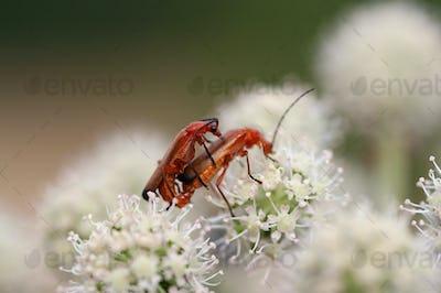Vermnation - macro of the beetles