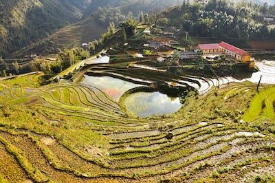 Terraced rice field in Cat Cat, Sa Pa, Northern Vietnam