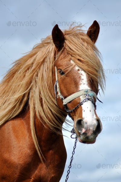 Portrait of a beautiful horse with blonde mane
