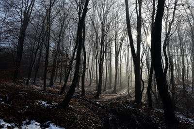 Fog in the forest. Misty morning in the forest