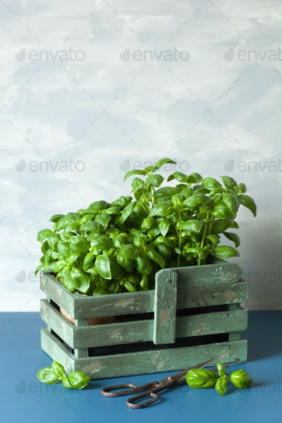 fresh basil herbs in rustic container