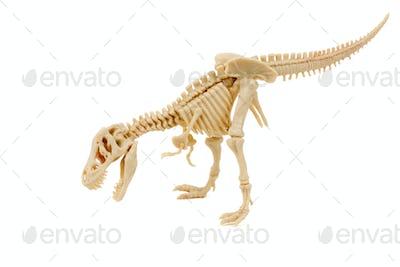 T-Rex dinosaur skeleton