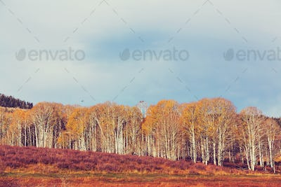 Autumn meadow